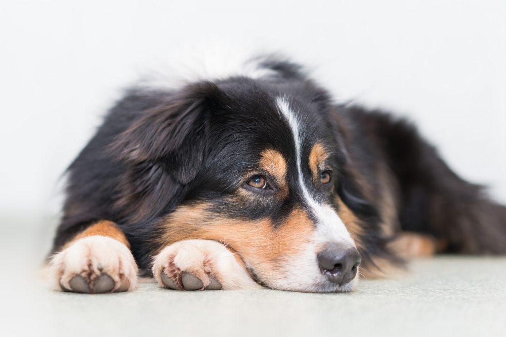 Hunde Agility